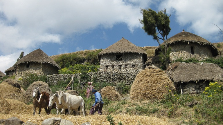 Patterns of Commoning: The Resilience of an Indigenous Ethiopian Commons
