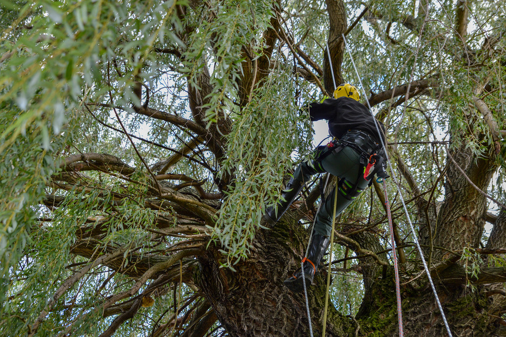 Arborists Arising: From Tree Care to Tree Camping