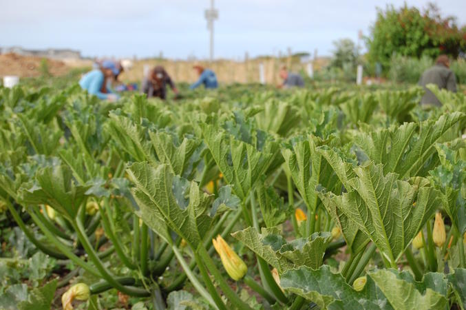 Democratizing Our Food System: Frances Moore Lappé on Agroecology